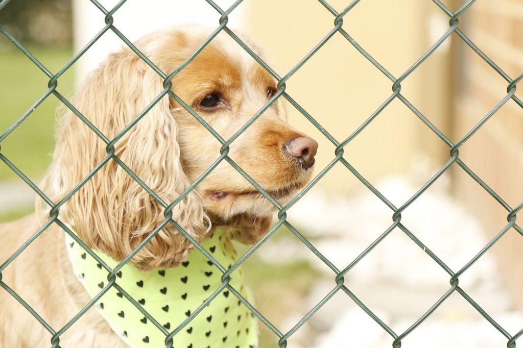 hond die achter een hek staat